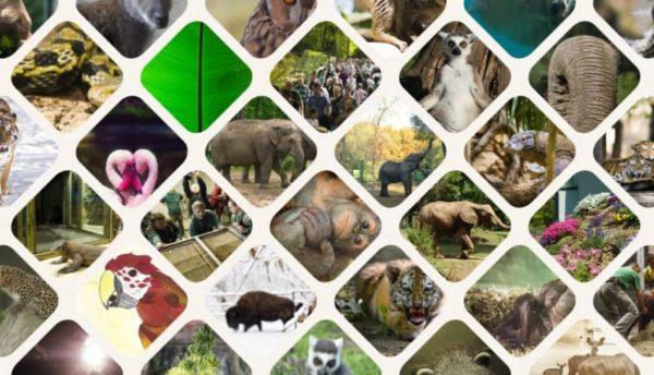 SóstóZoo, avagy a Nyíregyházi Állatpark bemutatása